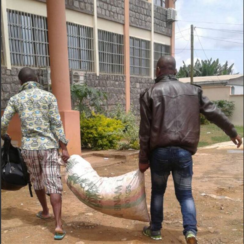 CAMEROUN :: Cameroon: Two arrested with bags of pangolin scales in Ebolowa